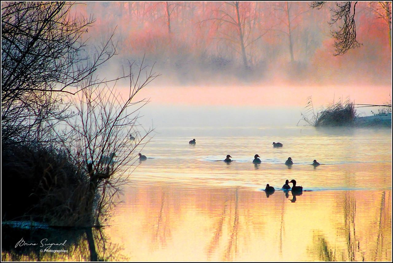 Morning Mist - Brume Matinale