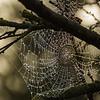 Rain Beads  -  Des Perles de Pluie