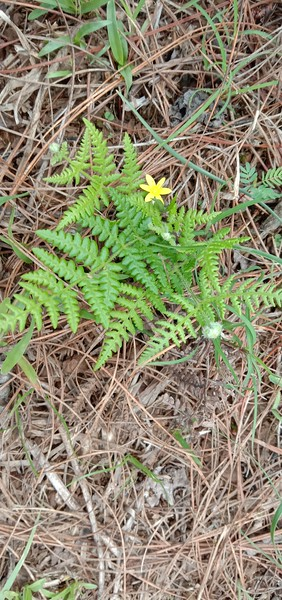 Blooming Fern