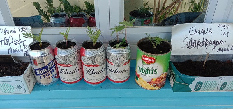 I like to use various planters. Every thing from beer cans, Vegetable cans and milk cartons.