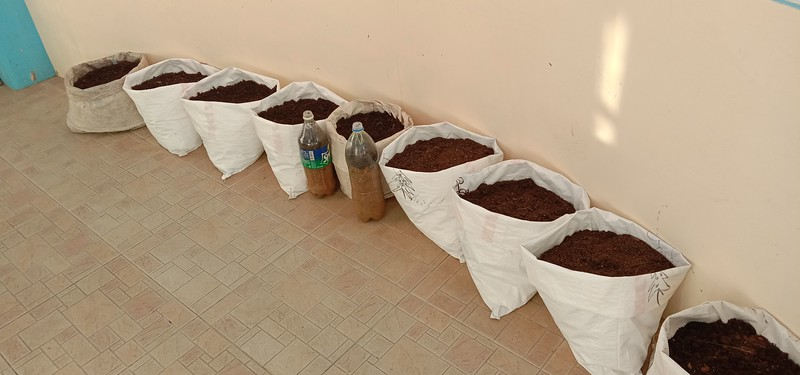 Carrots and Dakion Radish planted in rice bags. The perfect portable planter