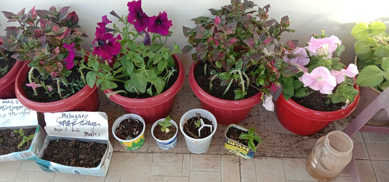 I grow vegetables and flowers in every kind of container