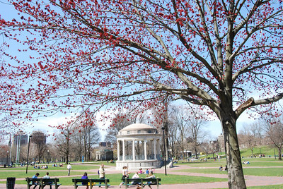 Boston Commons in springtime