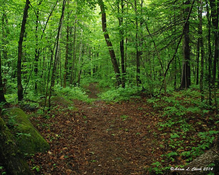 Back down onto flatter trails