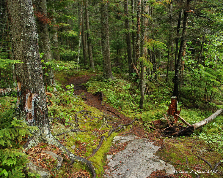 Here the trail is leveling out as it comes up onto a small plateau for a distance