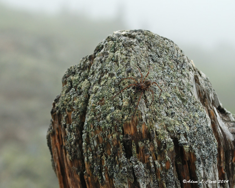 This spider was on the top of the summit post.  It didn't want to be on one side of the post, but every time it went to the other side it didn't like the wind and moisture being blown on it