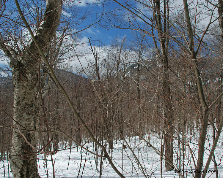 There were some limited views through the trees.  This one is looking over to Wind Gap