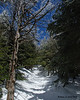Heading up a steady climb as I near the Alpine Trail