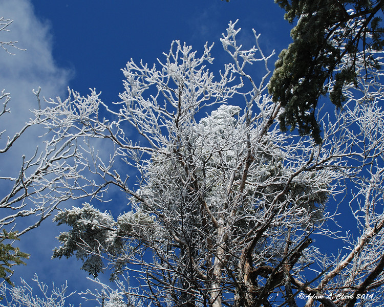 More and more ice built up on the tops of the trees now