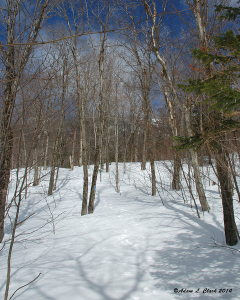 Still heading through open hardwoods along the Monroe Trail