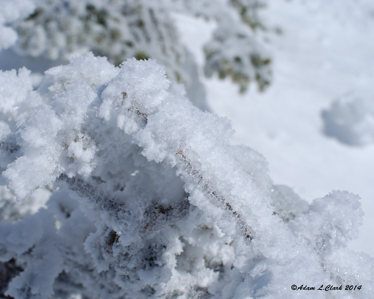 Rime and snow formations on some summit plants