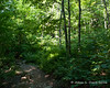Plenty of green around just before the forest turns from hardwoods to softwoods