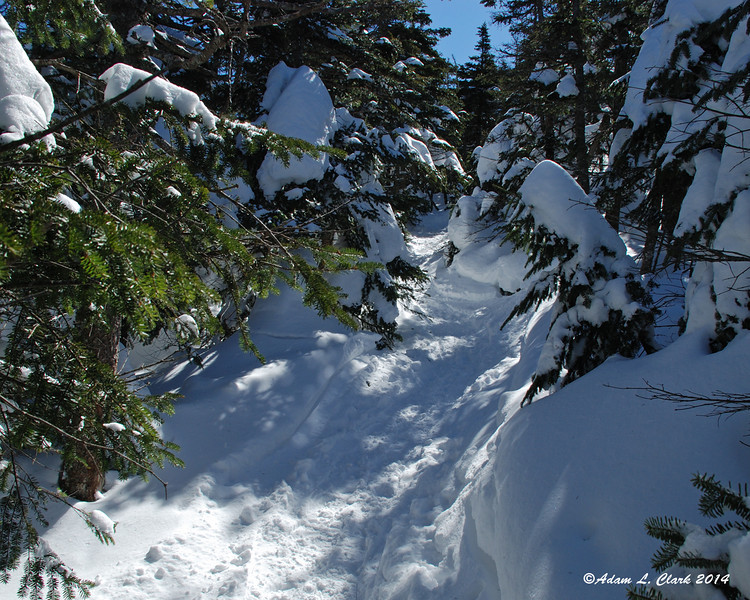 Away from the ski trail and back into the trees.  The branches are a bit low as the snow is so deep