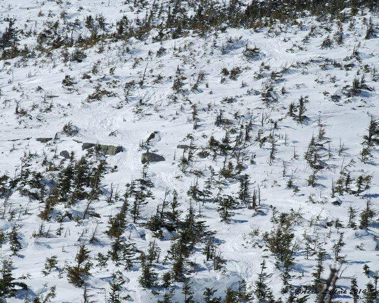 A little hard to make out, but the trail follows up through this area on the way to the summit