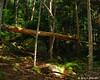 Fallen tree over the Hi-Cannon Trail