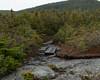 One short bog bridge to protect fragile vegetation along the trail