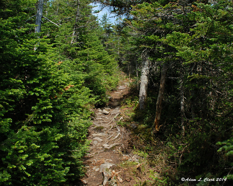After climbing steadily, the trail gets easier for a ways before the summit of North Crocker