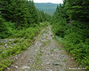 """Eventually you come out on the old logging roads though.  While easy to follow, they get pretty boring.  As another hiker said, """"The Lincoln Woods Trail of Maine."""""""