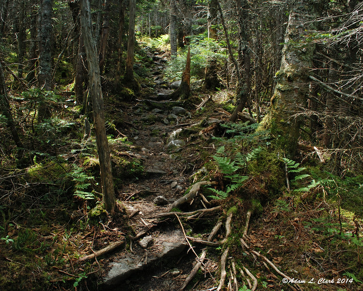 After going back down into the saddle between the peaks, this is the trail heading back up South Crocker