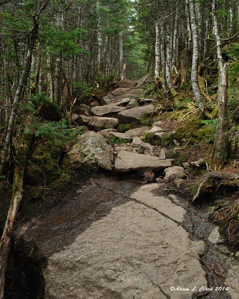 Heading up the trail above Mizpah Hut