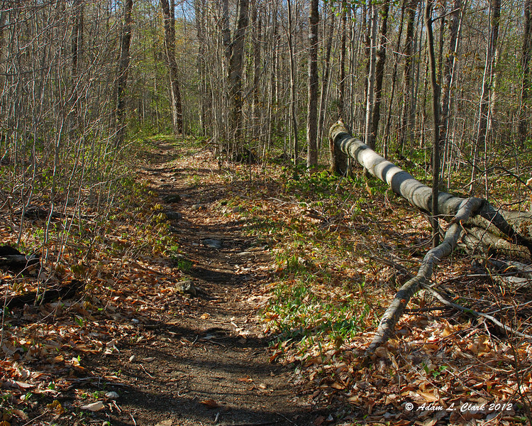 The trail heads gradually uphill to start with good footing