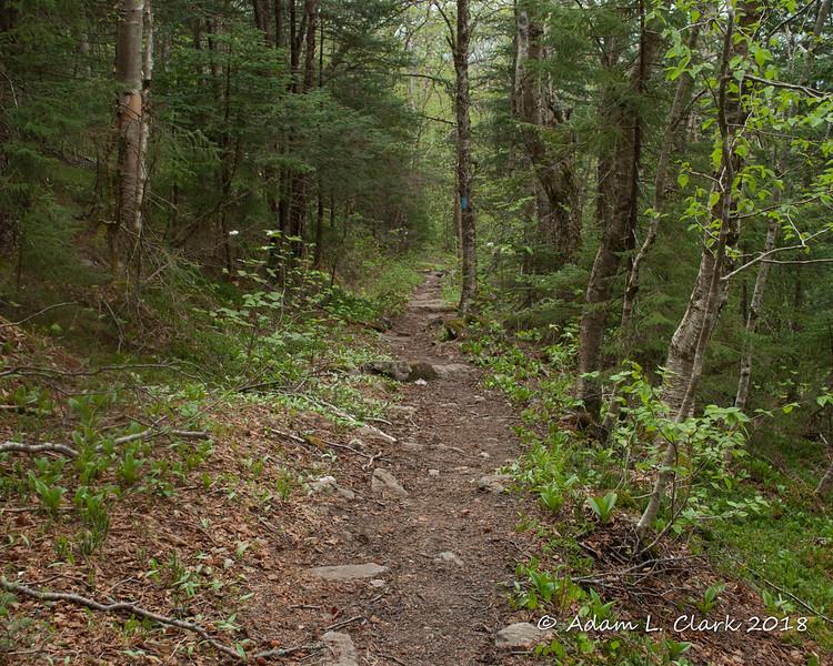Descending on the Bucklin Trail