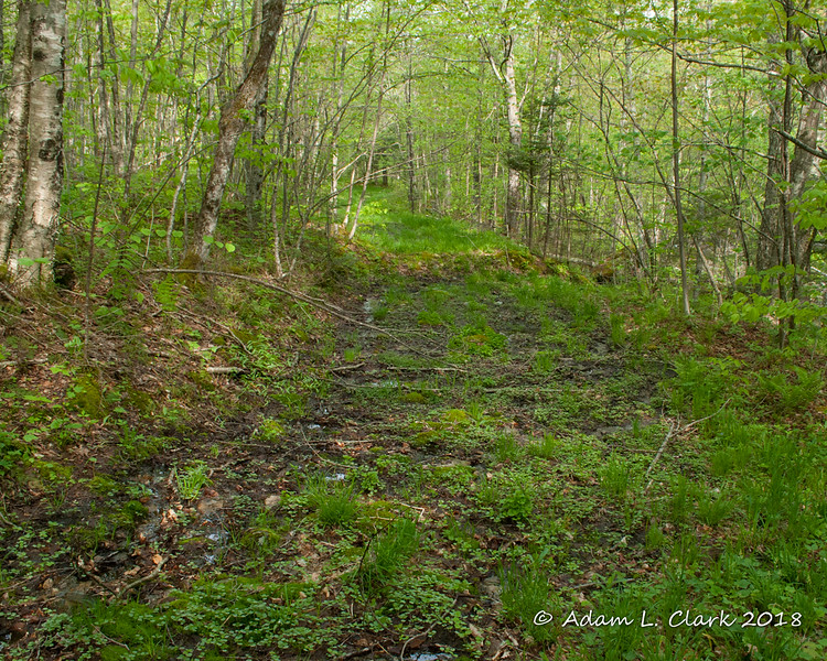 Looking back down the muddy woods road I followed