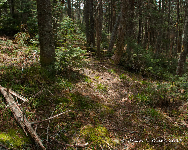 The herd path getting close to the Long Trail