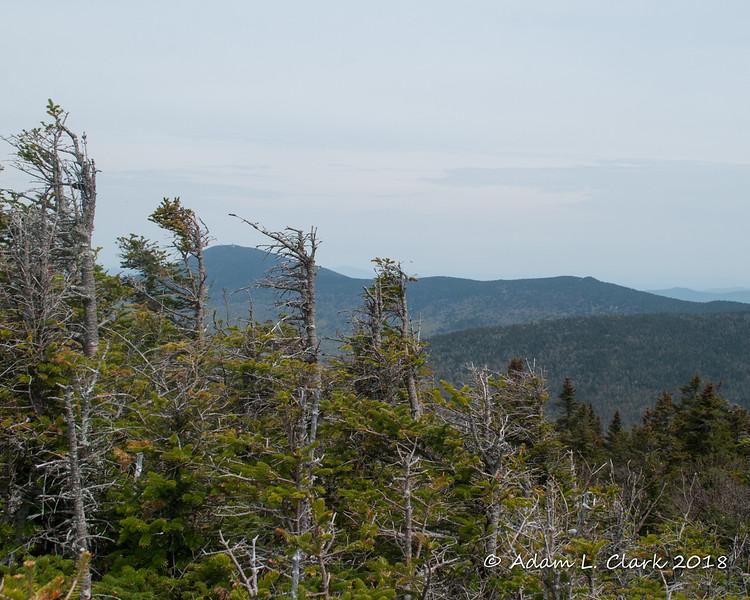 Pico Peak behind the trees