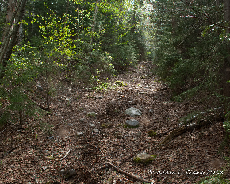 Above the third crossing, the old road is steep here and now in the softwoods