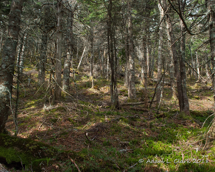 The woods along the bushwhack just before getting thicker near the eastern peaks of Mendon