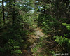 The trail going over the knob in the picture 3 shots back