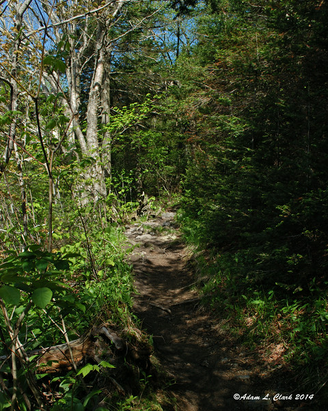 Another easy section of trail as you keep gaining elevation
