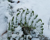 Snow resting on a fern that is still green