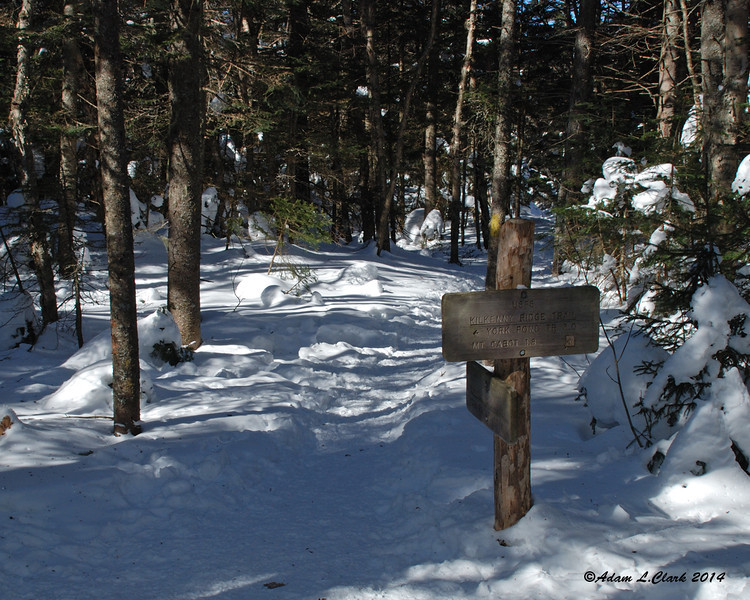 At the height of land in Bunnell Notch where the trail meets up with the Kilkenny Ridge Trail