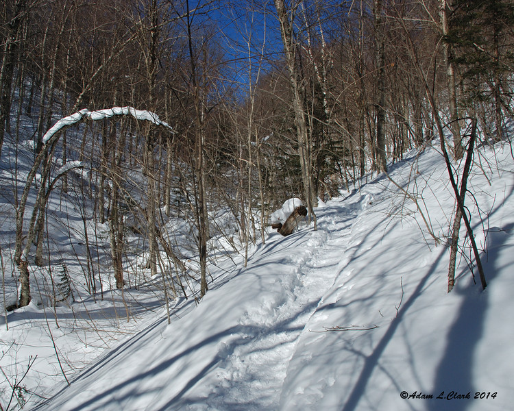 Down in the saddle of the notch, the trail stays on the hill just above the brook