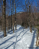 Once the trail leaves the logging roads, it has a mix of climbs and flat sections through the trees as it gets into Bunnell Notch