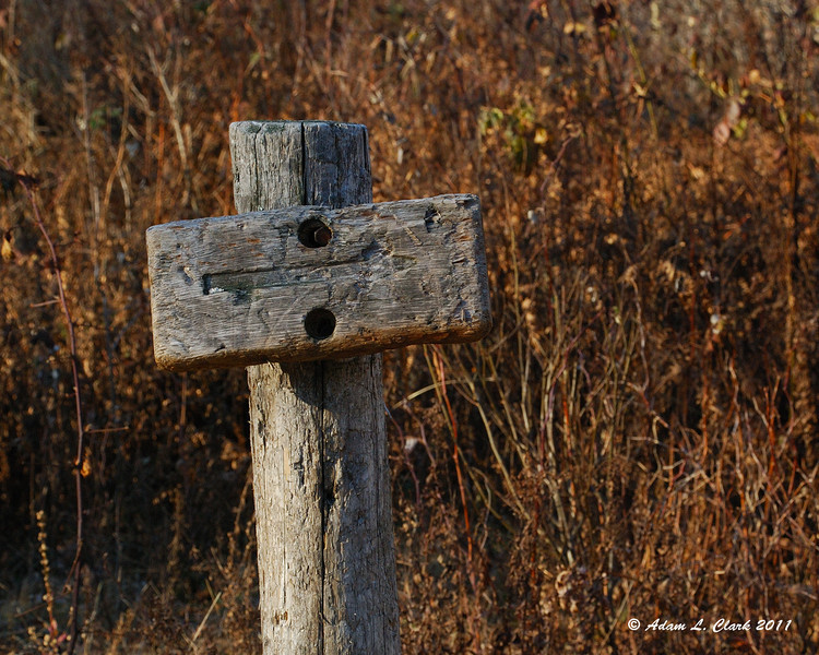 Sign pointing the way at a fork in the old logging roads that are the trail at this point