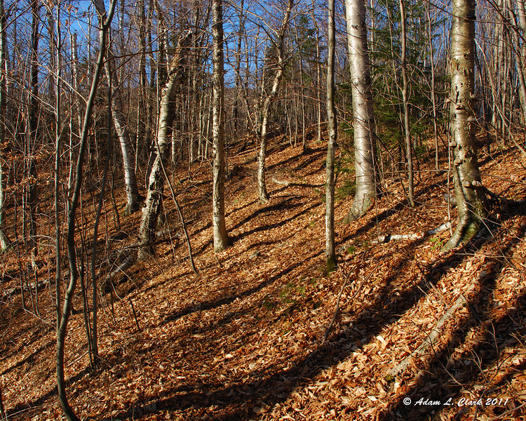 The early section of trail was pretty easy and a nice walk through the open hardwoods