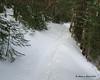 Still more sidehill trail