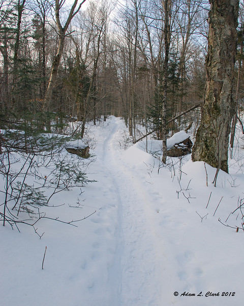 After turning away from the brook, the trail stays very gentle with long straight sections