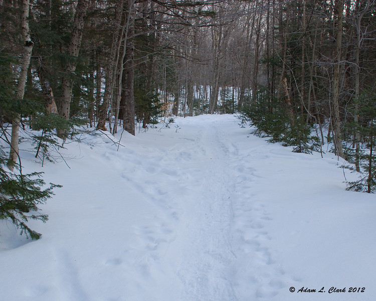 Looking back at the Carrigain Notch Trail junction