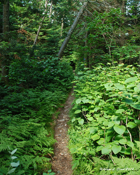 Getting further up the trail, the bushes are encroaching in places