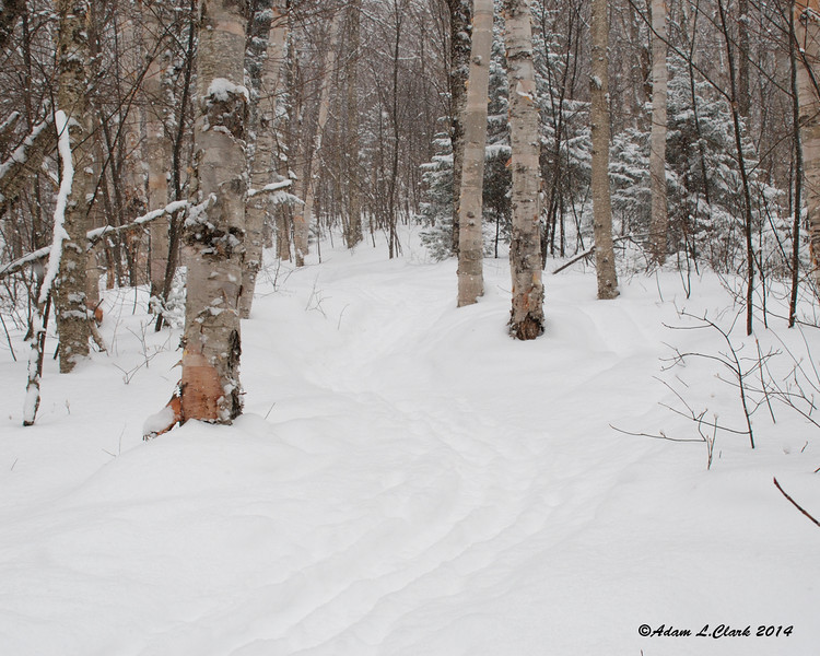 Early on going up the Fire Warden's Trail.  Snowshoe tracks and ski tracks