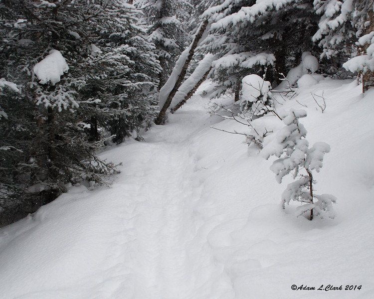 Headed back in the other direction, the trail is starting to get into the conifers some now