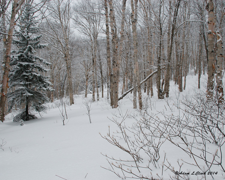 This nice open section of birch glades helps this non-skier understand why this is such a popular spot for back country skiing