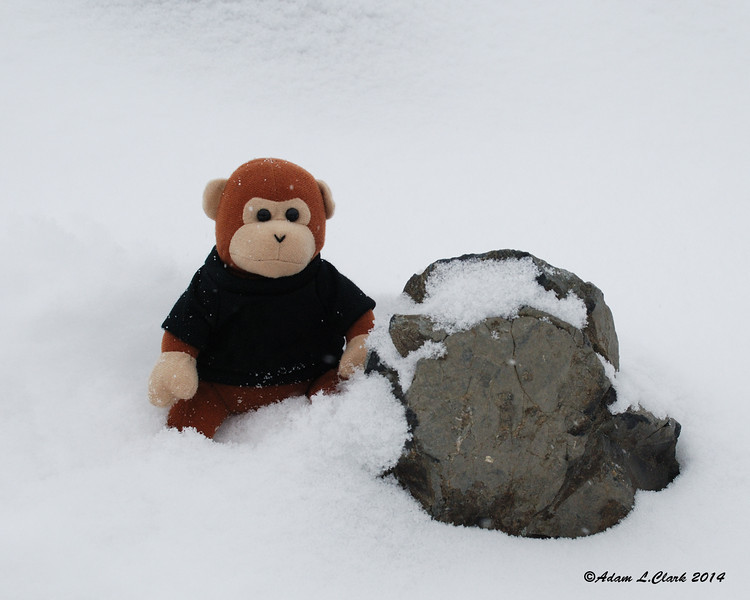 Miles the Mountain Monkey sits next to a rock on the summit cairn