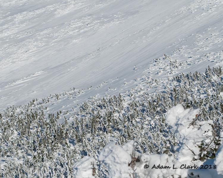 Trees poking up through the snow at treeline