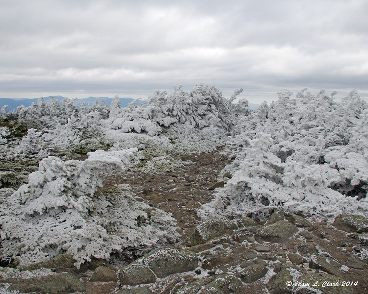 Trees around the South Peak summit are covered in rime