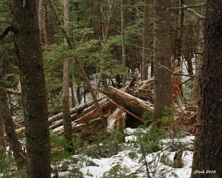 There were some spots on the trail where multiple trees have blown over during high winds